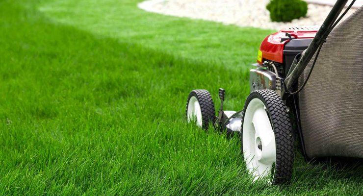 Progettazione e manutenzione giardini Roma